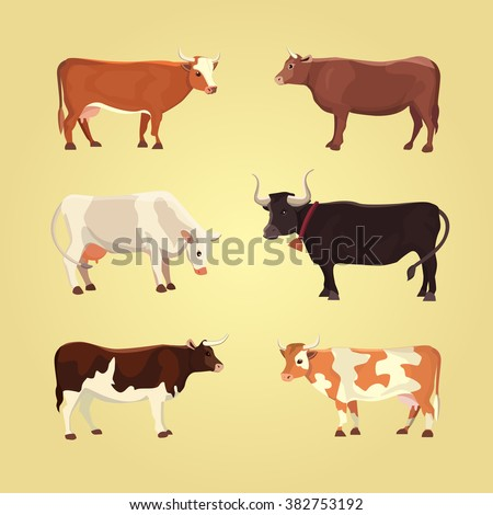 set of different  breeds cows