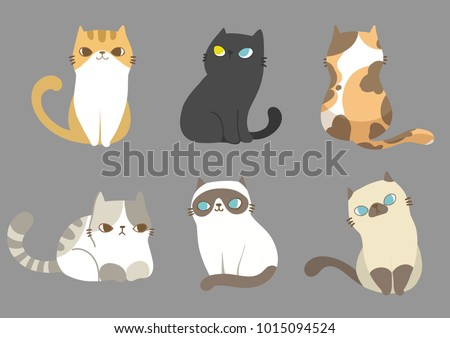 set of different cats breeds in