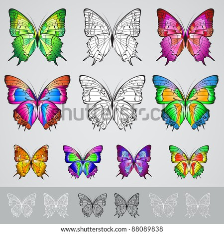 Set of different colored butterflies. Illustration on white background