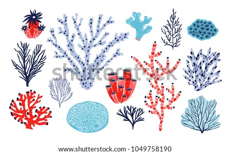 Set of different corals and seaweed or algae isolated on white background. Bundle of marine species, deep sea creatures, ocean flora and fauna. Underwater biodiversity. Colorful vector illustration
