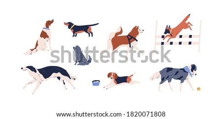Set of different dog vector flat illustration. Collection of various doggy playing, walking, sitting and performing tricks isolated on white background. Domestic animals or pets enjoying activity