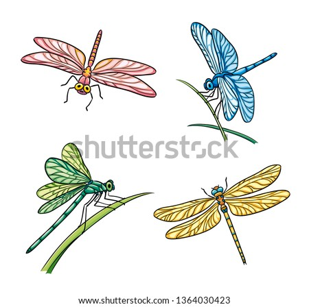 set of different dragonflies