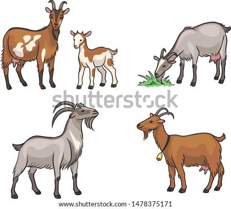 Set of different goats. Vector illustration. EPS8 Сток-фото ©