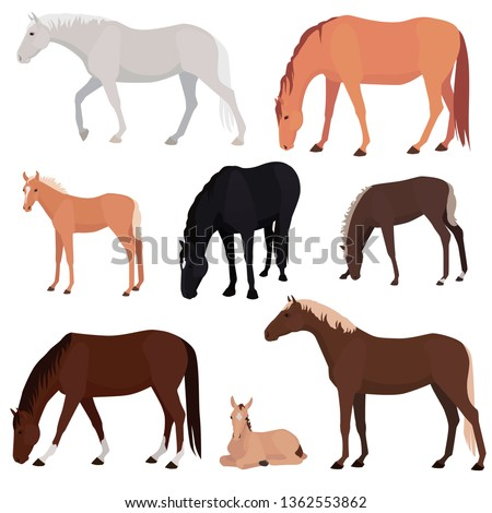 set of different horses