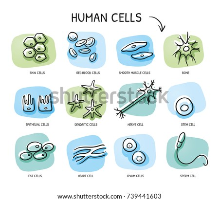 Set of different human cells for medical info graphics, nerve, bone, epithelial, muscle, blood, stem, sperm, oocyte. Hand drawn cartoon sketch vector illustration, marker coloring on blue green tiles