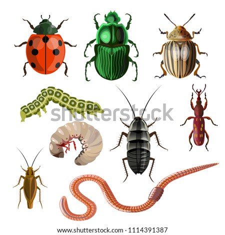Set of different insects and worms. Vector illustration isolated on white background