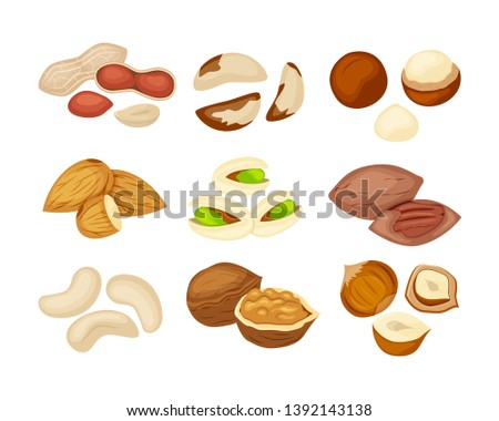 Set of different kind of nuts almond, walnut, cashew, pecan, peanut, pistachio, macadamia,Brazil nut, hazelnut. Vector illustration isolated on white background.