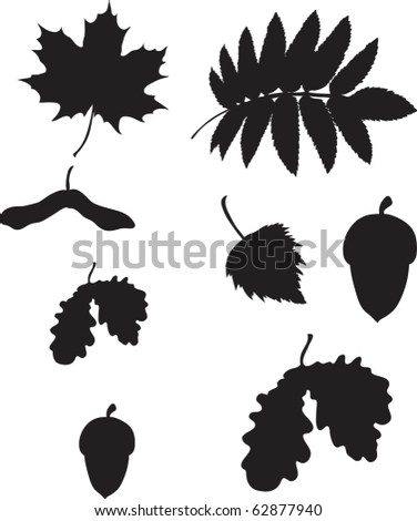 set of different leafs