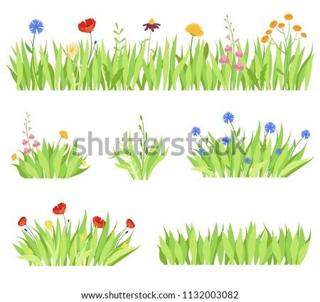 Set of different natural garden flowers in the grass. Fresh garden flower beds on a white background. Vector modern illustration #1132003082