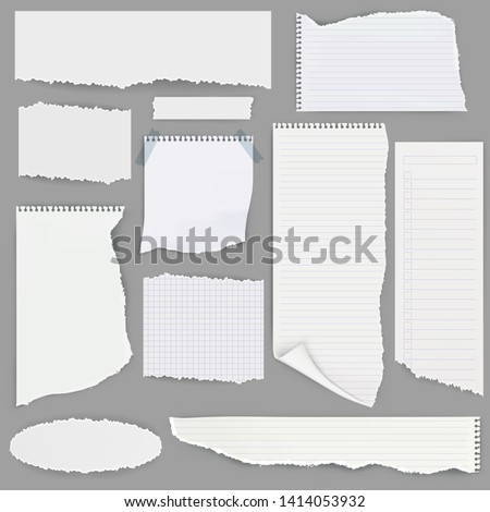 Set of different pieces of  lined notebook papers with perforation. Vector illustration.