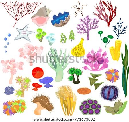 set of different species of