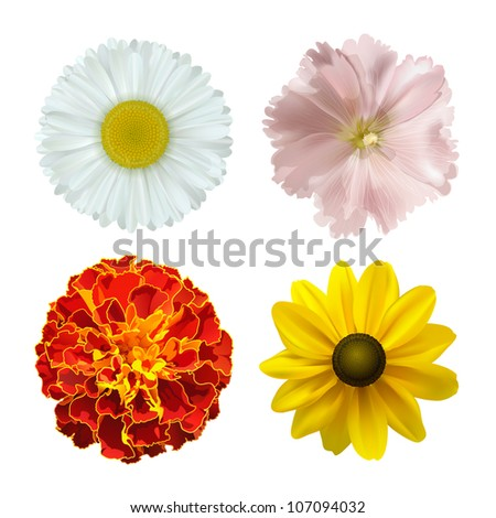 set of different summer flowers on a white background. vector illustration