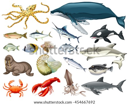set of different types of sea