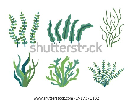 Set of different underwater sea plants and green algae for food. Edible seaweed and leaves. Plants of the aquarium. Vector illustration