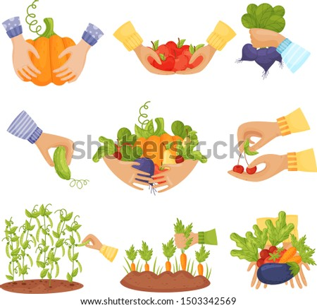 set of different vegetables and