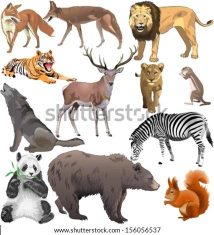Different wild animals together - photo#8