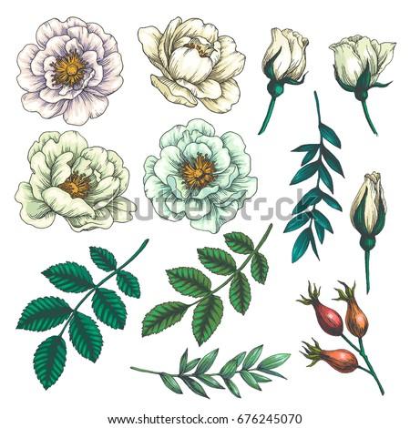 set of dog rose vintage