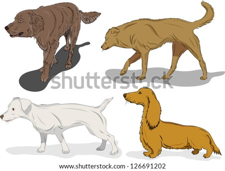 Set of dogs in action on white background