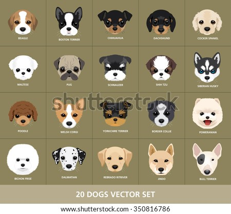 set of dogs vector illustration