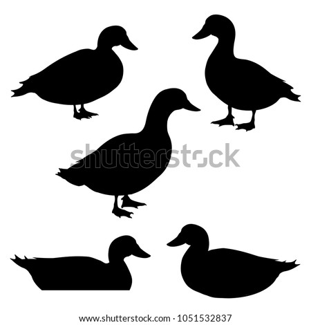 Set of ducks silhouettes in different poses. Vector illustration isolated on white background