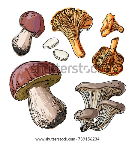 set of edible mushrooms a