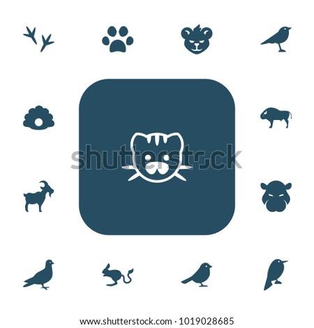 set of 13 editable zoo icons
