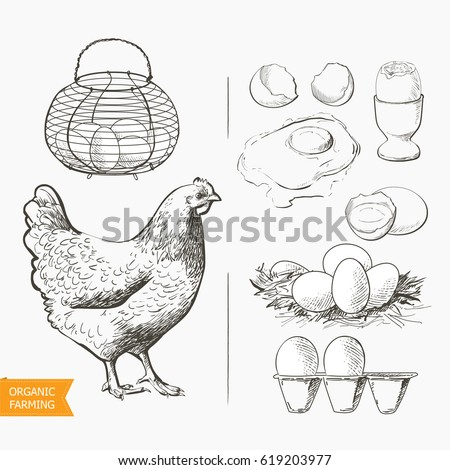 Set of eggs in the vintage antique-french-country wire egg gathering basket. Raw eggs on white background vector illustration