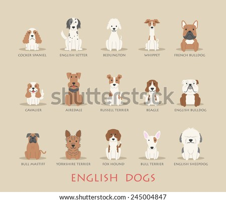 set of english dogs   eps10