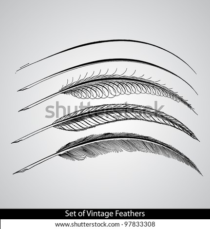 Set of engraved calligraphic vintage feathers. - Gems of Flourishing. - 1888