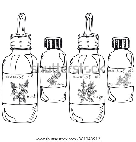 Stock Vector Set Of Essential Oils Bottle Isolated For Medicinal Herbs Essential Oils Vector Sketch Bottle For