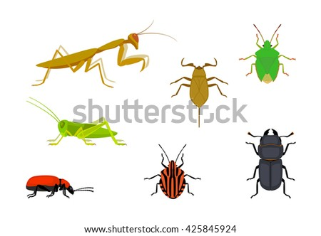 set of european insects