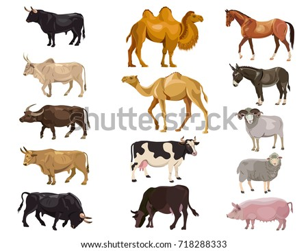 set of farm animals   bulls