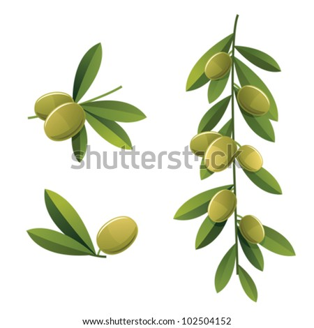 Set of few different green olive branches - stock vector