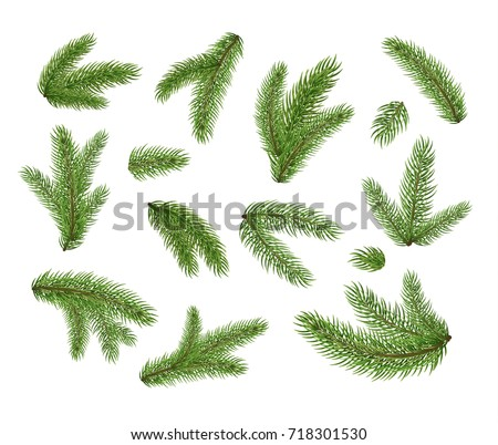 set of fir branches christmas