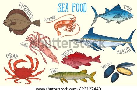 set of fish and marine fauna for the fish market or restaurant. Shrimp, squid, mussels, marlin, flounder, tuna, crab, pike, snapper