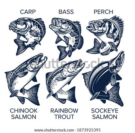 Set of Fish Emblems Vintage Style. Carp, Bass, Perch, Chinook Salmon, Rainbow Trout, Sockeye Salmon Vector Illustrations.