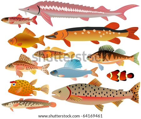 set of fishes