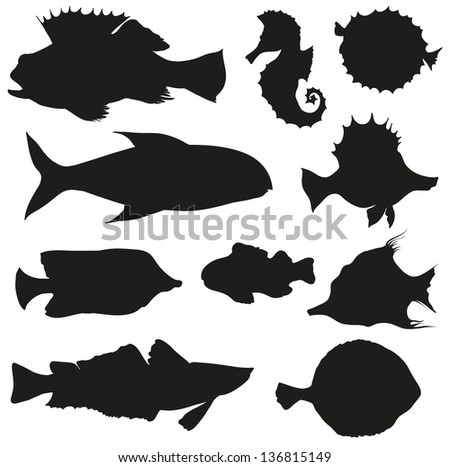 Set of fishes isolated on a white backgrounds