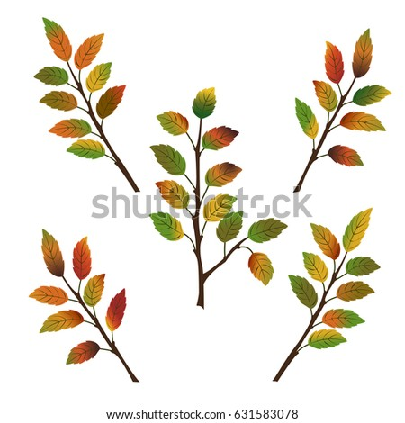 set of five branches of