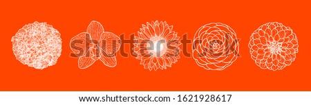 set of five flowers line art in