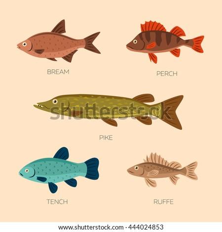 set of five river fish  bream