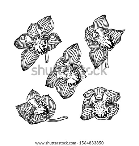 set of five vector linear hand