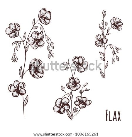 set of flax  linum   brown