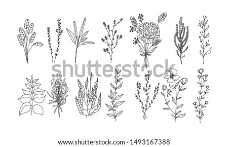 set of floral elements for your design, Rare and protected flowers, plant lineart illustration