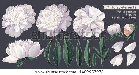 Set of floral elements with white peonies flowers and leaves. Hand drawn, vector botanical flora for decoration, wedding invitation, patterns, wallpapers, fabric, wrapping paper. Realistic style.