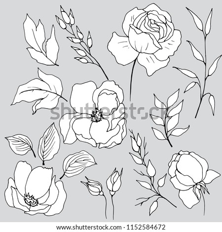 set of flower elements flowers, graphic drawing