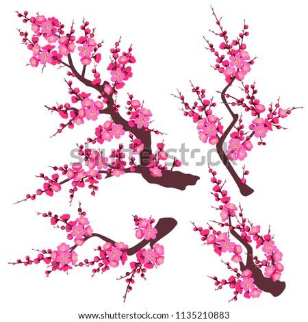 set of flowering tree branch
