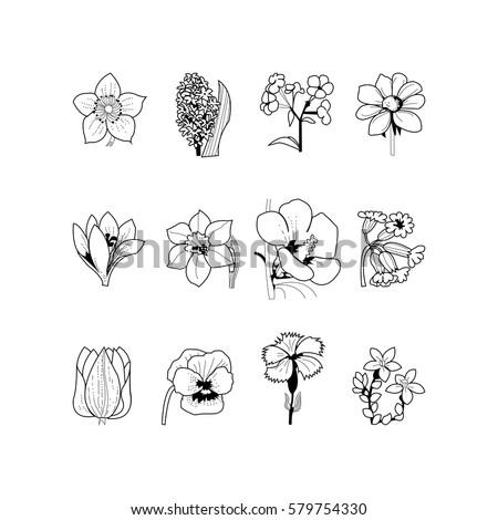 set of 12 flowers