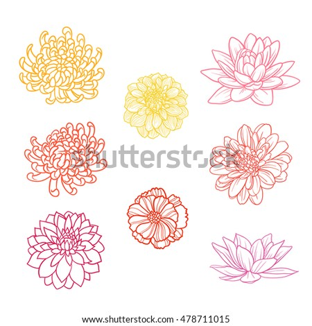 Set of flowers hand draw