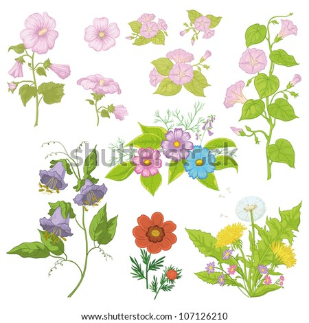 Set of flowers isolated on white background: cosmos, mallow, ipomoea, adonis, dandelion, kobe. Vector illustration